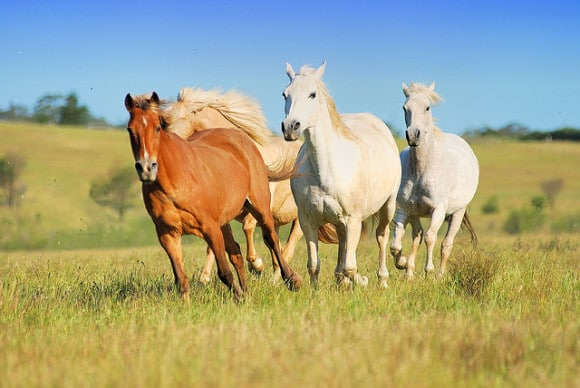 positive affirmations - horses