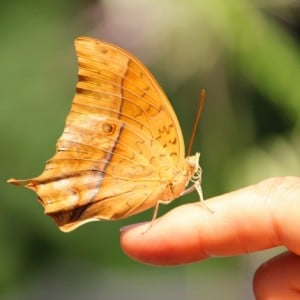Psychic Reading Can Help You Grieve butterfly