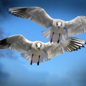 Twin flame relationship gulls