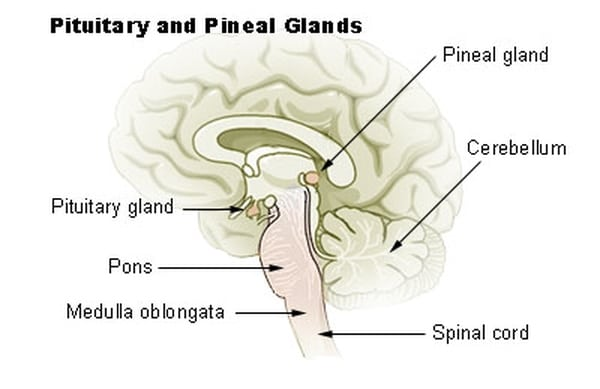 Your Pineal Gland: The Third Eye and Psychic Abilities • Psychic ...