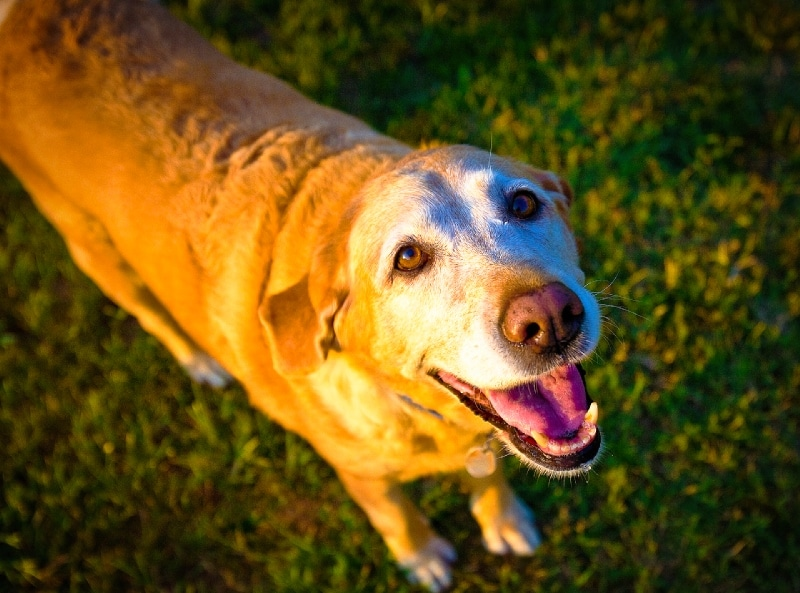 Dogs are angels in disguise old angel