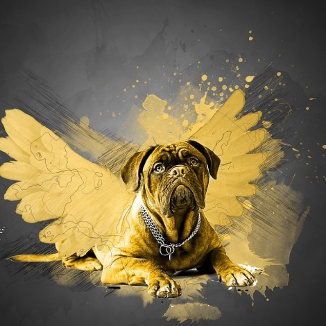 Dogs are angels in disguise